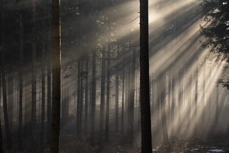 Durch den Nebel zur Sonne